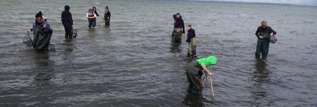 Kunskapsskolan Landskrona håvar med SEA-U på Havsresan 2013