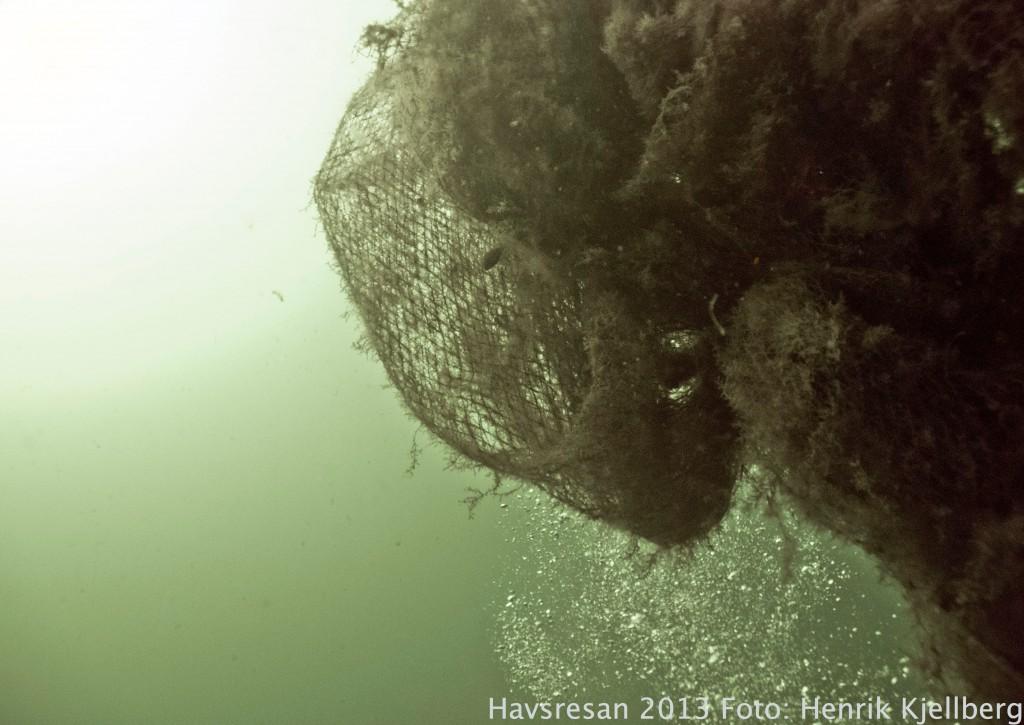 Ett övergivet fiskeredskap i Öresund...